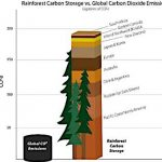 temperate rainforests carbon storage