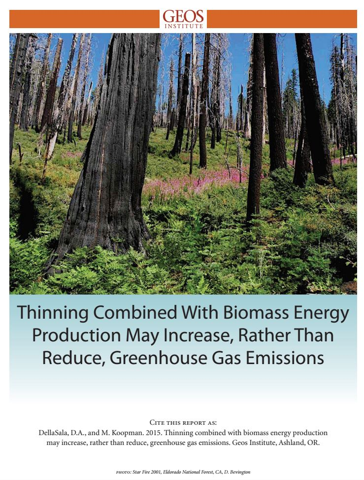 biomass report thumb