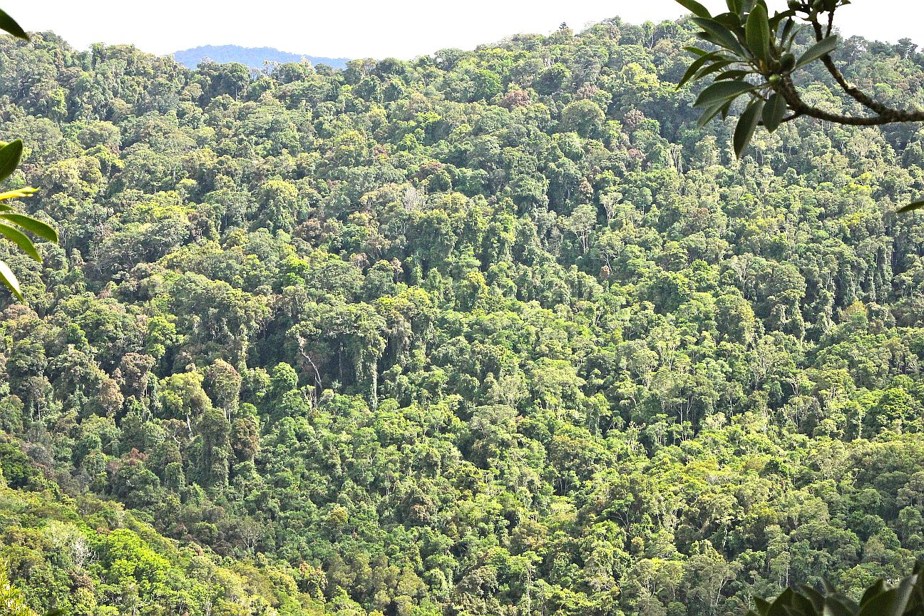 tropical rainforest LamingtonNP Australia dds