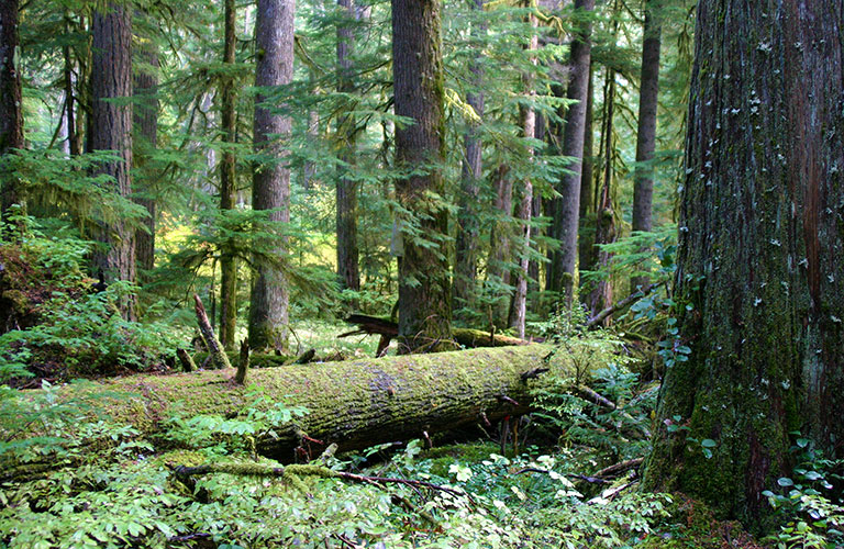 Temperate Rainforests