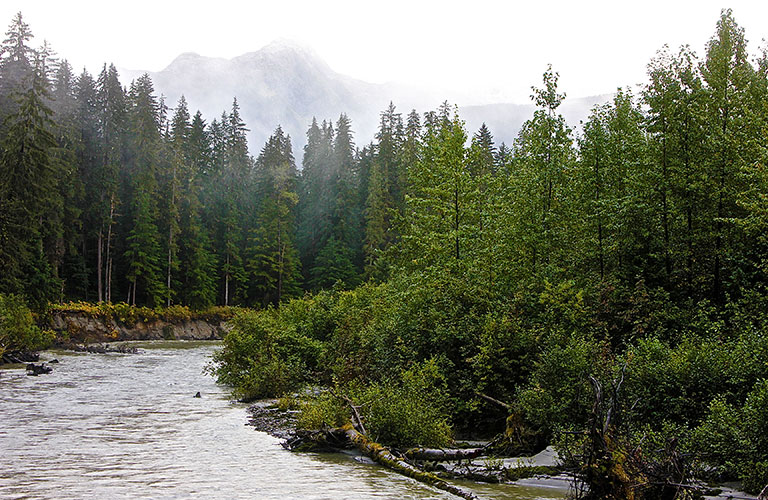Tongass Rainforest